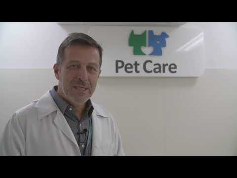 Pet Med & Pet Care: Como amenizar o stress do gato na hora de ir ao veterinário?