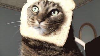 Cat Toast Thumbnail
