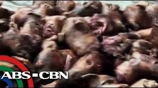 Over 100 kilos of dog meat seized