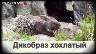 Животные на букву Д (1)