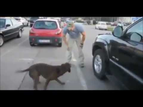 Dog Reunited with Soldier After 8 Months!