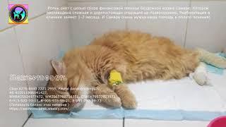 Волонтеры пытаются спасти кошку от паралича конечностей Удаление кисты  позвоночника animal shelter