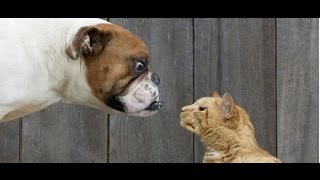 Борзый кот и собака