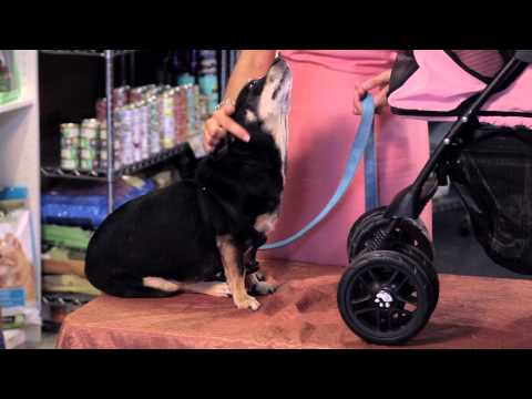 Baby Carriages for Dogs : Dog Care Tips