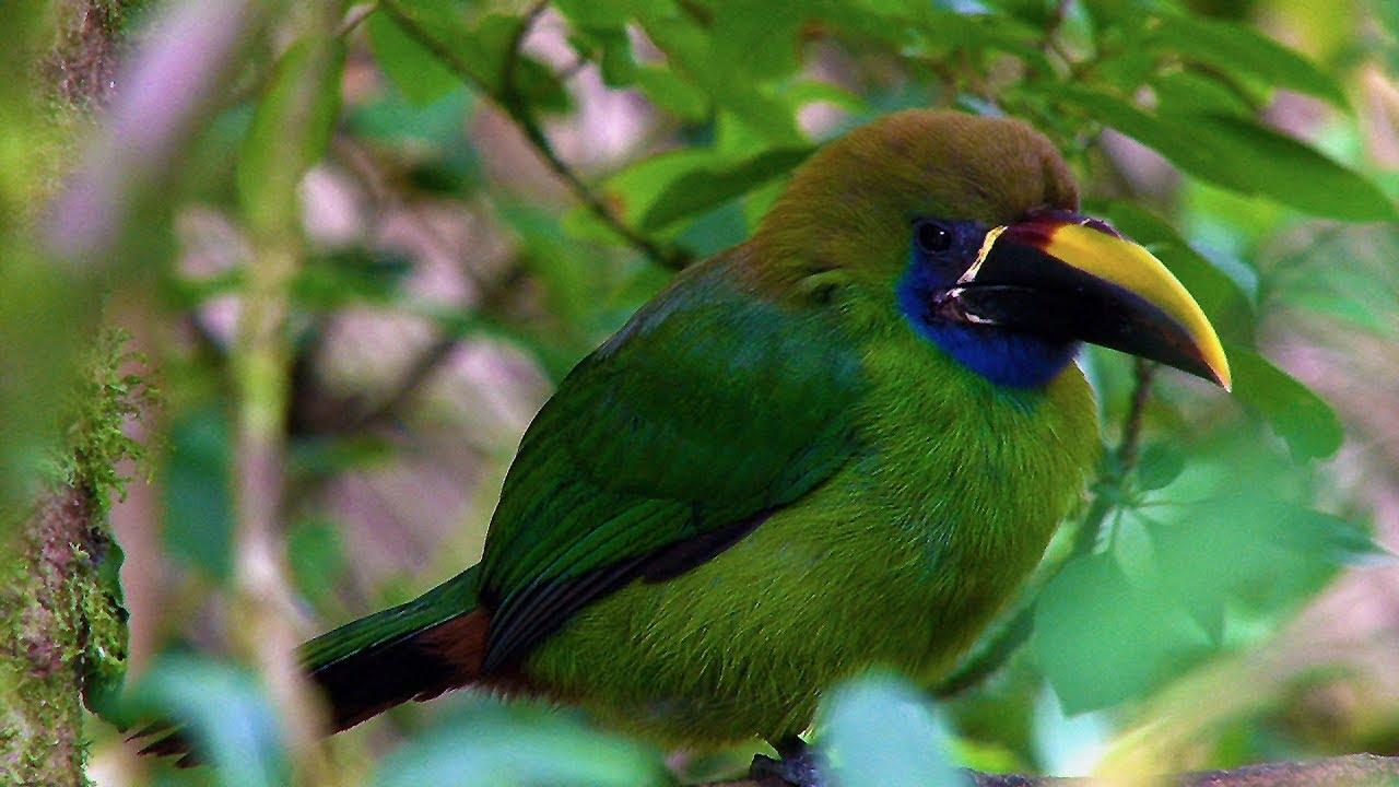 Birds & Nature Costa Rica