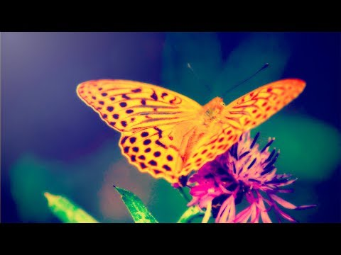 Relaxing Music for Stress Relief. Soothing Music for Meditation, Yoga, Healing Therapy