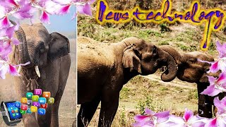 HOW DO SCIENTISTS DEFINE ELEPHANTS' PERSONALITIES?  - News Techcology
