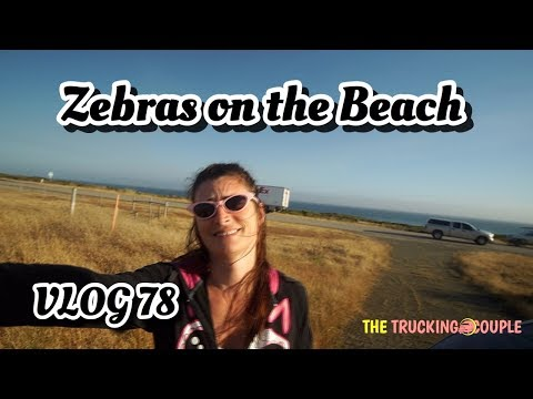 ZEBRAS ON THE BEACH, HEARST CASTLE, PASO ROBLES, CAMRIA CALIFORNIA VLOG 78