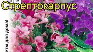 Стрептокарпус обыкновенный. Краткий обзор, описание характеристик, где купить семена streptocarpus