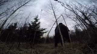 Охота на вальдшнепа весной / тяга вальдшнепа / готовим вальдшнепа