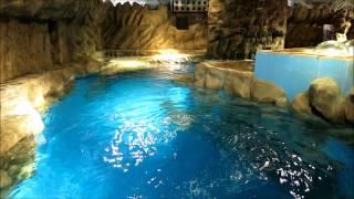 Ocean Park Walrus