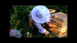 07 10 13 Adding a third box to our Warre hive