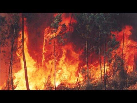 Curso Formação e Treinamento de Brigada de Incêndio Florestal - Combate a Incêndios