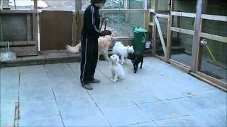 Mellow Vibes Dog Training - The Training Of Guss [part 3]