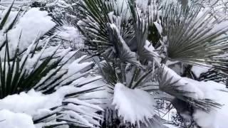 Баку. Снег. Бульвар и Парк Бульвар