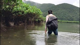 マングローブの川を歩いて遡上してみた 熱帯雨林で遭難#1