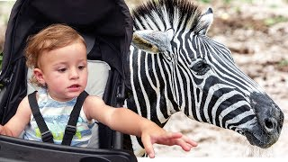 Zoo Song +More Nursery Rhymes & Kids Songs - LETSGOMARTIN