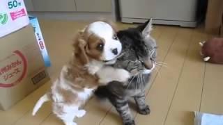 Потрясающе!!! Супер прикольные щенок и котенок!!!