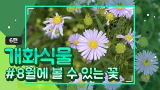 [천리포수목원 개화식물]#6편/8월에볼수있는꽃소개/8월…