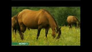 Kalandozás a ménesek világában - a hucul ló