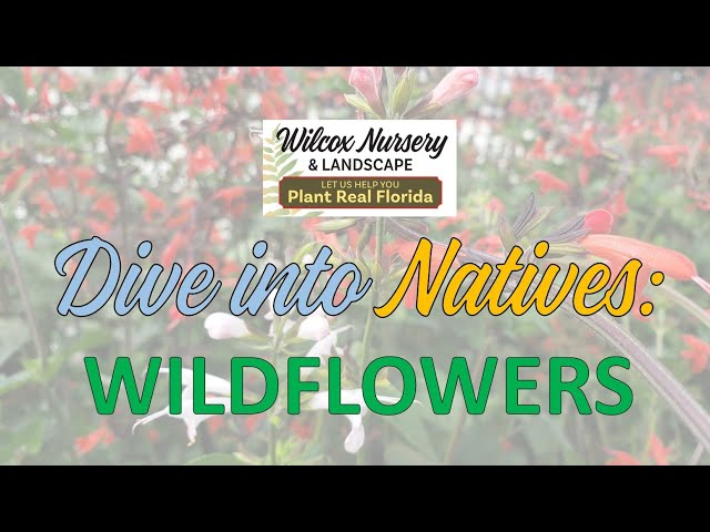 Dive into Natives: Wildflowers
