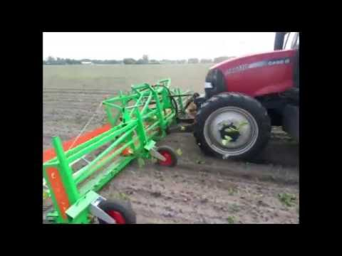 Weed control of corn maize in organic farming with CombCut