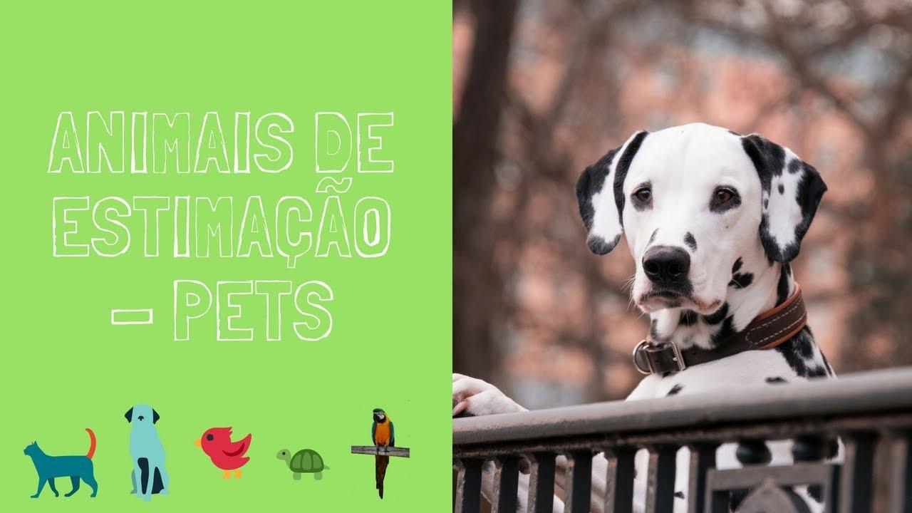 Animais de estimação | Pets | vocabulário para crianças português e inglês