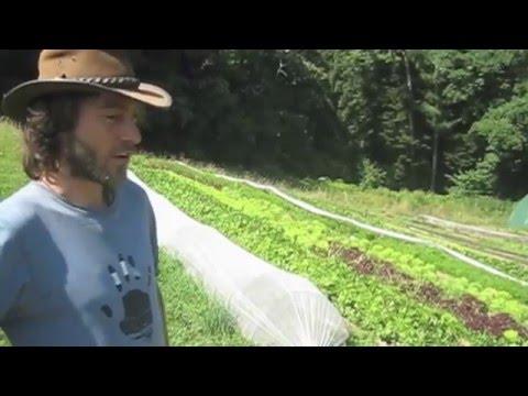 Maraîchage bio sur petite surface à la ferme de la Berthe : nos planches permanentes