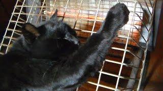 Кошки Херсона ждут тепла 22.10.2016 прикол