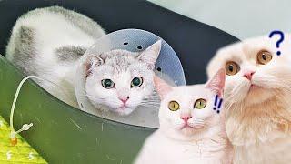 함께살던 고양이가 없어졌을때, 고양이들의 반응은?