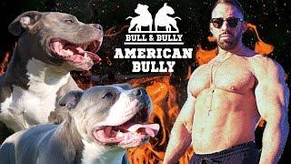 AMERICAN BULLY: Die Hunde von Bodybuilder KEVIN WOLTER