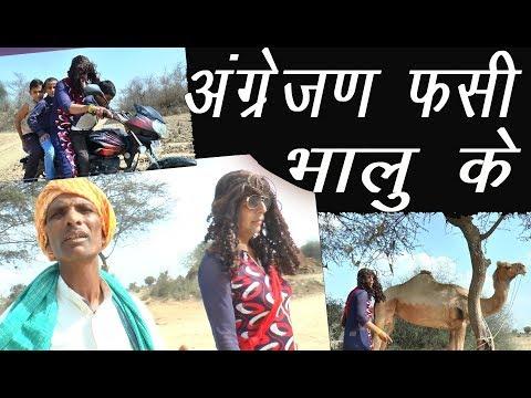 भालू ताऊ के फसी अंग्रेजन #  Rajasthani Haryanvi Comedy # भालू की कॉकटेल # Sherda Desi Dude