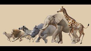 I dreamed of Africa - Kwetsani Camp.mp4