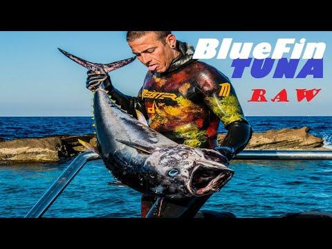 Τούνα με ψαροντούφεκο στο Αιγαίο - Extreme Tuna Spearfishing in the Aegean Sea RAW STORY ✔