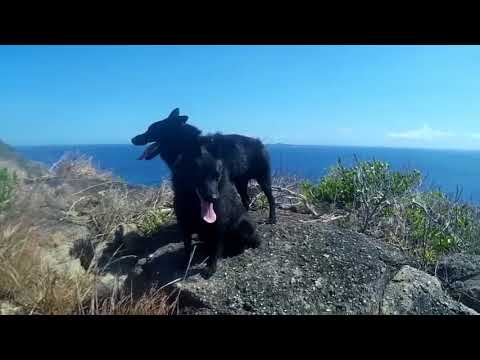 Sailing Schipperkes explore Tagauayan Island in the Philippines