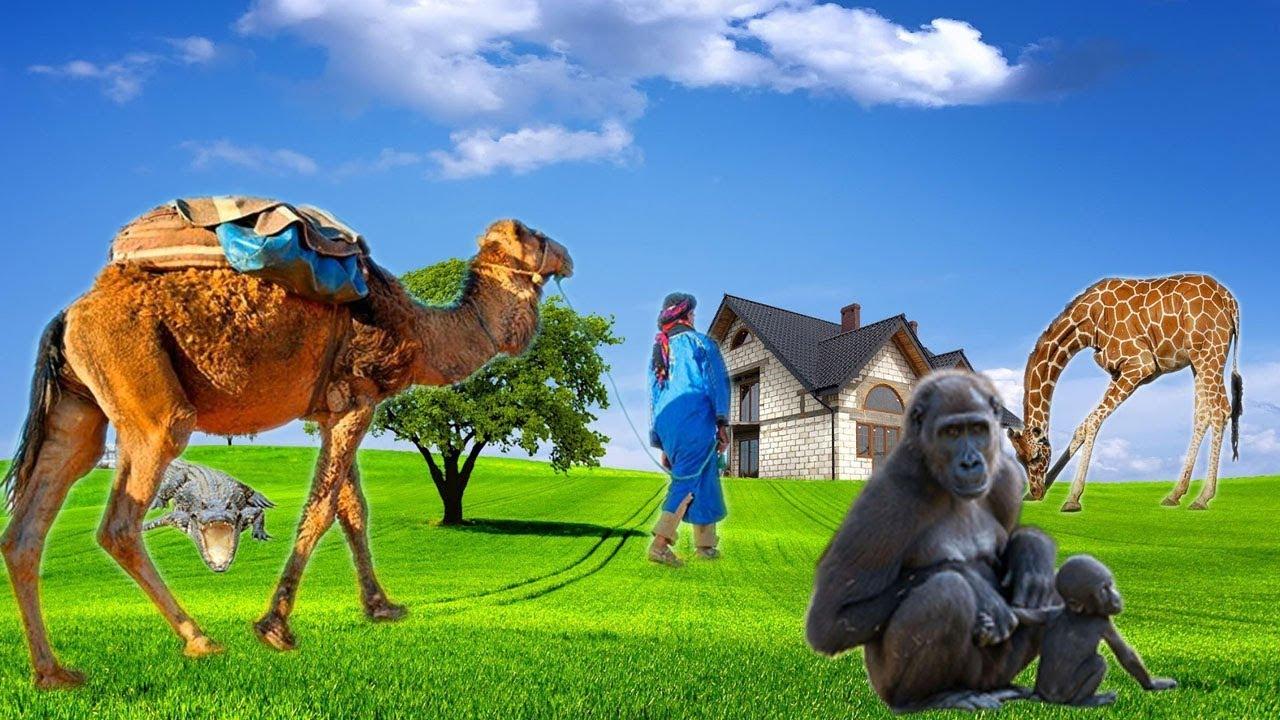 Bài 3: Động vật hoang dã và màu sắc