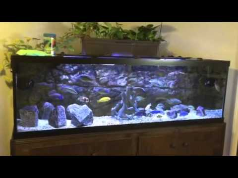 How To Switch Your Aquarium Over Black Silicone The Easy Way