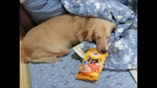 我が家の老犬チェマちゃんは年齢はもう14歳です。 それで食事は10歳以上...