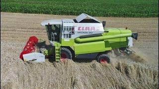#370- Najsłabsze pole z pszenicą po burakach! Nie ma tregedi! Gościnnie- Mateusz Traktorzysta