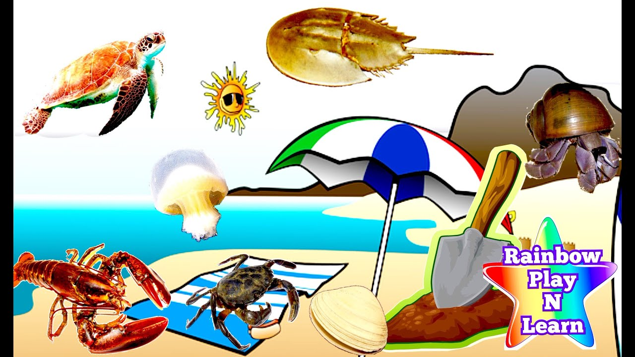 learn sea animals names at the ocean beach fun sounds sea