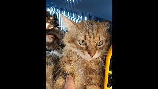 Кошки спасенные из ада ищут дом!