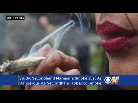 Is Secondhand Marijuana Smoke Dangerous? Biologist Says Yes