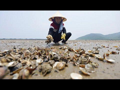 Vietnam's ecosystem damaged by Formosa