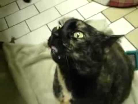The most scary cat in the world - YouTube