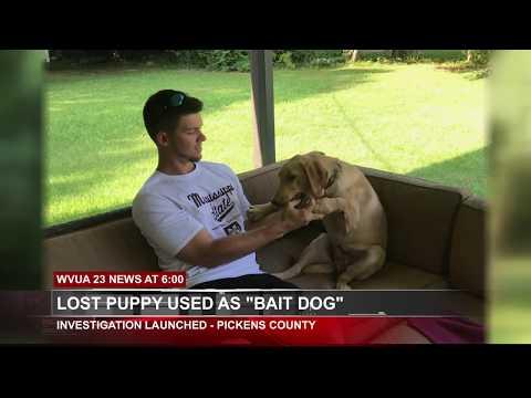 Dogs Bite Decatur Al: PICKENS COUNTY AL - CHASE DAVIDSON