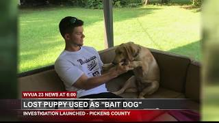 LOST PUPPY USED AS BAIT FOR DOG FIGHTING