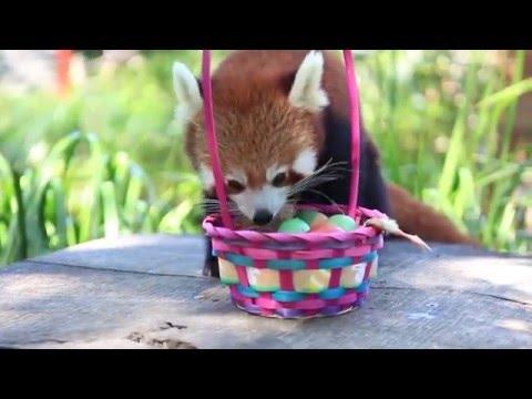 Animals In Australia Receive Easter Treats