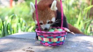 Animals in Australia receive Easter treats