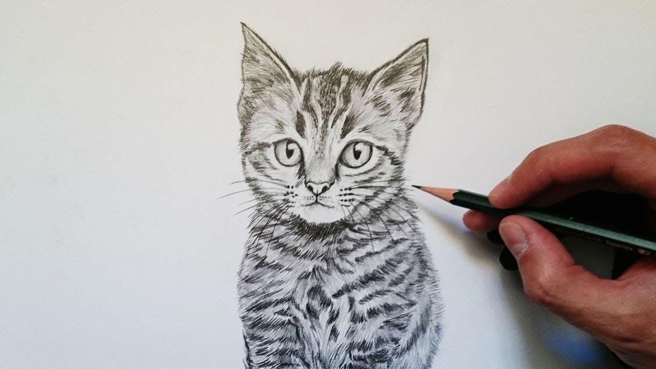 Aprende Cómo Dibujar Un Gato Realista Paso A Paso Youtube
