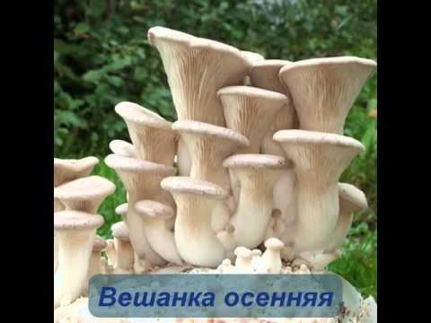 Когда собирать грибы: Как правильно собирать грибы в лесу